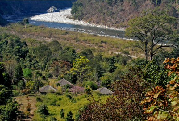 jungle lodges in india