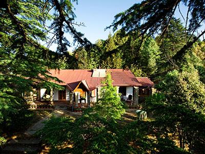 Shinrin-Yoku : Forest bathing @ RARE Lodges and Retreats