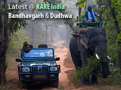 Presenting Dudhwa and Bandhavgarh on the RARE list